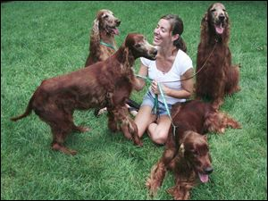 Erin Callahan of Temperance is surrounded by her show dogs, Irish setters, from left, Fizzy, Stella, Cash, and Stout.