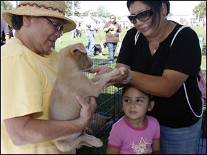 Sylvia Costilla, left, a foster mother with Planned Pethood, shows Perry the pup to Miki Decker and daughter Hannah of Point Place, during the Wiener Dog Nationals event.