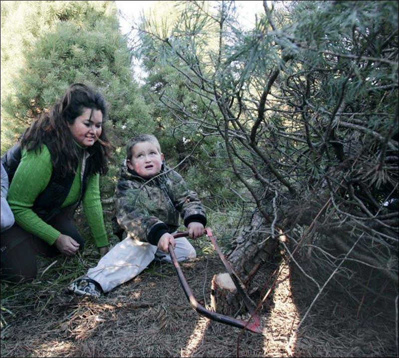 Country Pines Christmas Tree Farms: Cut-your-own Christmas Trees Abundant, But Consumers Might