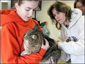 nbrn rabies21p     2/16/2008         The Blade/Herral Long    owners of pets getting their cats and dogs vacinated aganst rabies virus  at Monroe county animal control.   Lauren Crays 15    of Carlron mich  her cat  named Dog as Dr Dawn Hanusz  of  Temperance animal hosp gives shot.