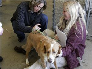 nbrn rabies21p     2/16/2008         The Blade/Herral Long    owners of pets getting their cats and dogs vacinated aganst rabies virus  at Monroe county animal control.  Kim Littlefield of Dundee holds spike as Angela Bondy with Temperance animal hosp givers shot