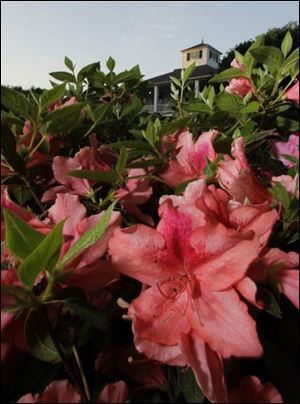 Azaleas bloom in front of the clubhouse at Augusta National. Those lucky enough to get on the grounds for the Masters take as many pictures of the scenery as they do the star golfers.