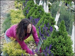 Claudia Fellman tends to plants at Gedert's Greenhouse, a program participant, which plans to hire five employees.