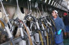 Big-dairy-farms-in-Woodville-area-get-permits-3