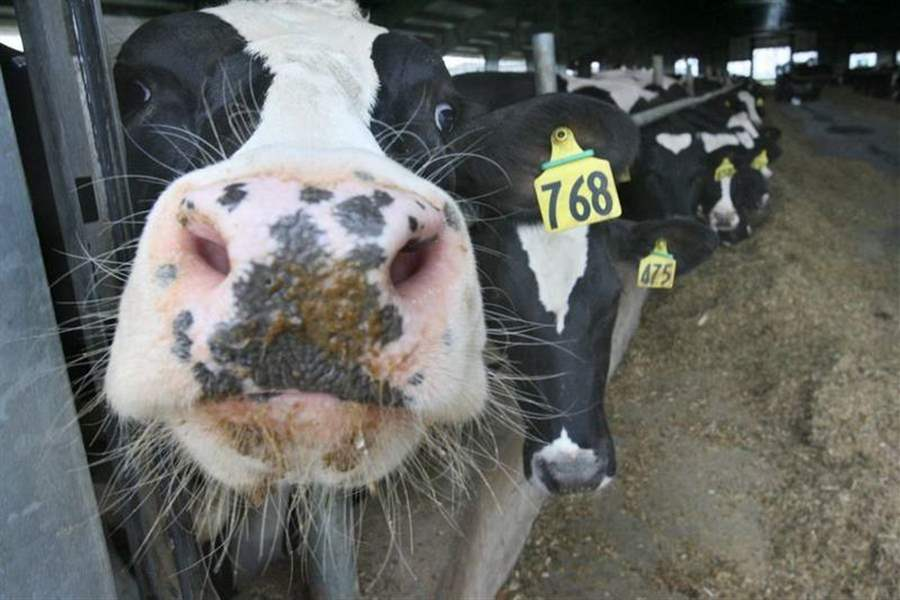 Big-dairy-farms-in-Woodville-area-get-permits