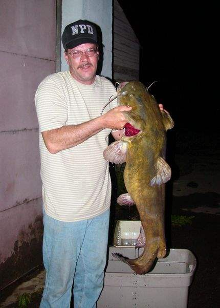 Flathead catfish come in all sizes - The Blade
