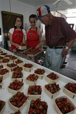 Strawberries-growing-ripe-for-picking-at-area-farms