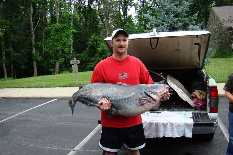 Record blue catfish taken in ohio the blade for Fat fish blue toledo