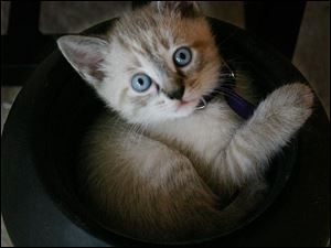 "Come on. What's cuter than <a href="" http://www.catsinsinks.com/"" target=""_blank ""><font color=blue><b>Cats in Sinks</font color=blue></b></a>? Nothing."