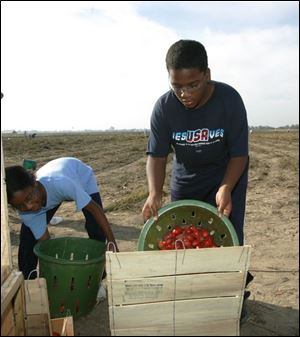 Elijah White, 11, right, and his cousin Victoria Goings, 9, help pick tomatoes for soup kitchens and food pantries. They were with a Collingwood United Methodist Church group.