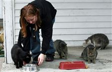Effort-begun-to-ease-the-plight-of-stray-cats-in-East-Toledo