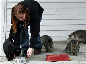 Starr Lucius attends to some of the 12 stray cats that she feeds twice a day on the porch of her east sid
