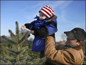 NBRN matthes04p  Maximus Attard, 3, considers marking a tree he likes as he's held up by his dad Ben. They live in Dearborn, Michigan. 25th annual Christmas tree festival at Matthes Evergreen Farm in Ida, Michigan, on November 29, 2008.  The Blade/Jetta Fraser