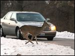 A deer runs in Wildwood Preserve Metropark. A metroparks spokesman said marksmen killed 30 deer in one night there.