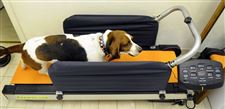 Workout-made-for-dogs-treadmill-helps-keep-pets-weight-under-control-2