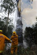 Australia-s-wildfire-toll-balloons-to-166-deaths
