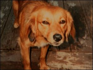 Princess was tranquilized and died after fleeing home Feb. 10.