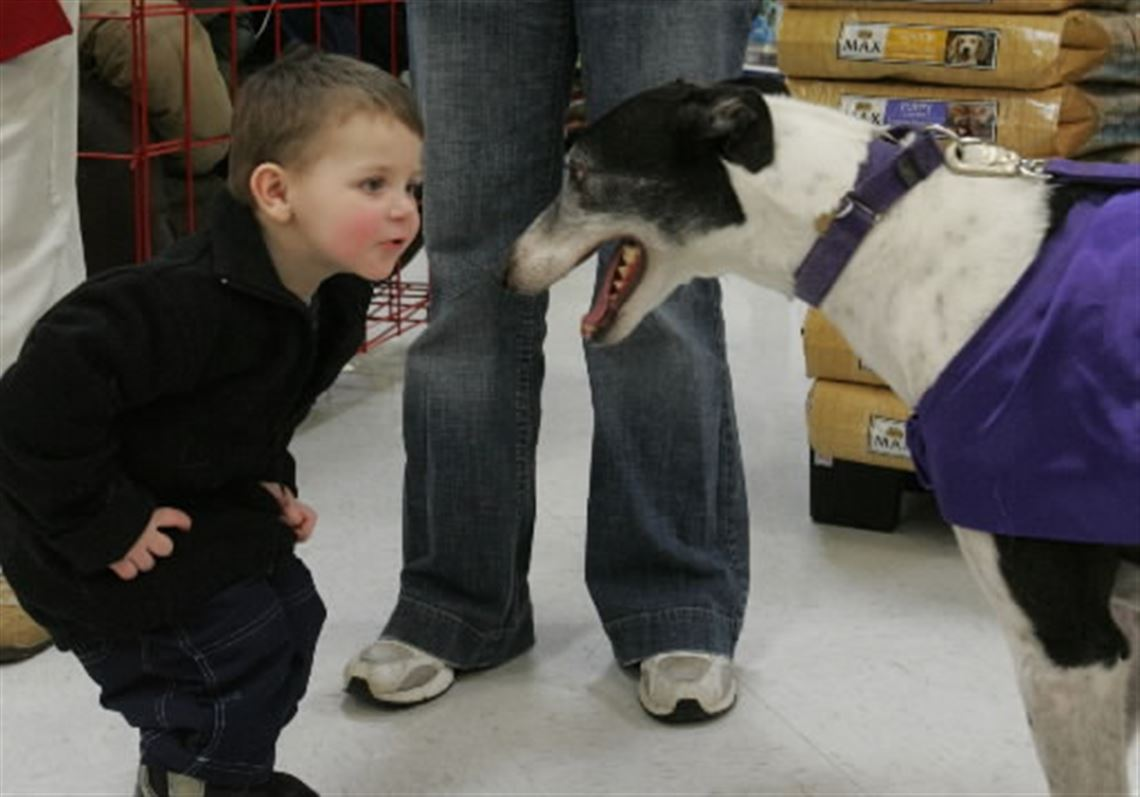 Recession Hurts Pets Too Toledo Blade