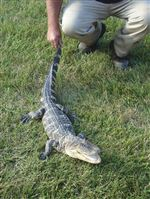 Port-Clinton-park-provides-gator-aid