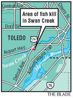 Thousands-of-fish-killed-in-Swan-Creek