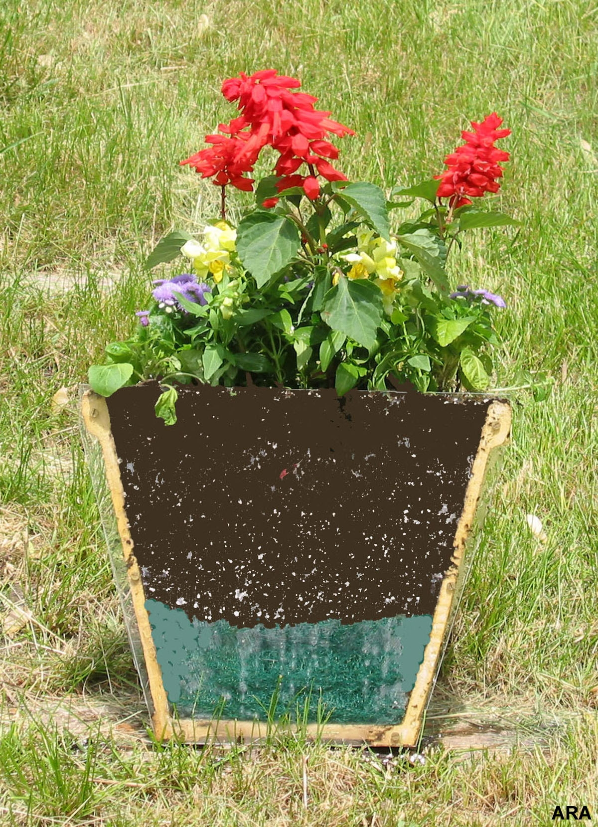 Easy To Grow Outdoor Container Plants - Outdoor Designs