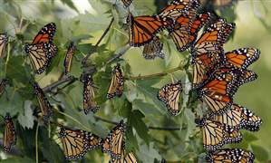 Monarchs-make-Oregon-stop-on-royal-tour