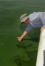 Algae-warning-system-tried-out-in-Lake-Erie