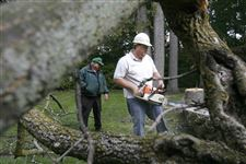 Cleaning-up-after-the-Emerald-ash-borer