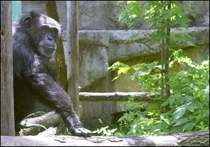 Fifi, shown in this 2000 file photo died after 46 years at Toledo Zoo.
