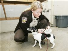 Lucas-County-dog-death-toll-rises-as-controversy-swirls-2