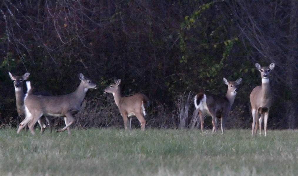 Vote-on-deer-cull-expected-Monday-night-2