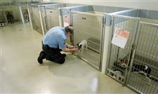 Dayton-shows-way-in-shelter-reform-animal-resource-center-becomes-model-3