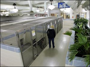 A visitor checks out dogs ready for adoption at the Montgomery County shelter. Dogs are housed in s