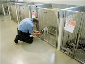 Robert Sexton checks a new arrival at the animal resource center, which, like Lucas County, does not adopt out 'pit bulls.'