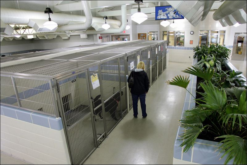 Animal Shelter Buildings A visitor checks out dogs