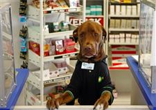 Dog-clerk-brings-joy-laughter-at-Florida-gas-station
