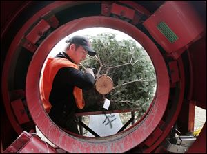 Josh Ward inserts a tree into the bailing machine at the Whitehouse farm. The biggest demand is for Douglas and Fraser firs.