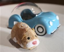 Group-contends-popular-Zhu-Zhu-Pets-hamster-toys-unsafe