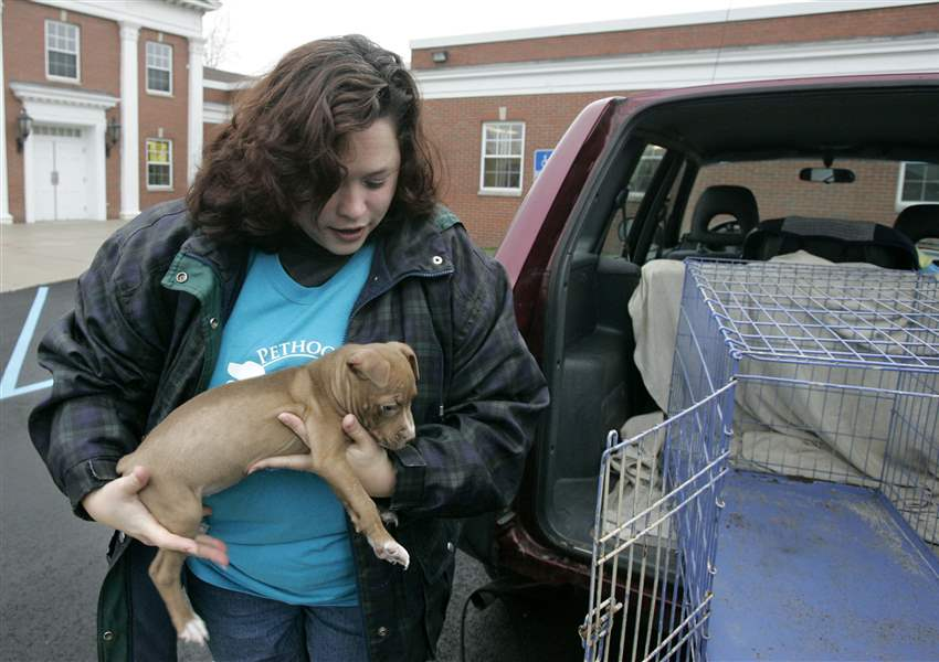8216-Pit-bull-pup-freed-from-Lucas-County-Pound