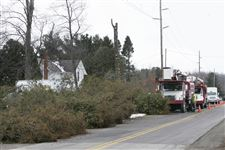 Family-loses-its-battle-to-save-140-evergreens