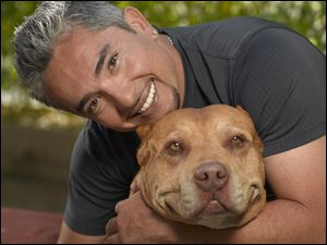 Cesar Millan referred to Daddy as his right-hand man and mentor in helping rehabilitate problem dogs. The 'pit bull' appeared with Mr. Millan in more than 50 episodes of 'The Dog Whisperer.'
