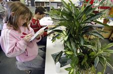 Rain-forest-project-at-Perrysburg-school-sprouts-roots-of-knowledge