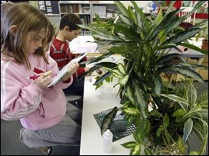 Leah Mattas, 9, a fourth grader at Fort Meigs Elementary, takes notes about the growth of one of the more than 200 plants that are part of the rain forest project.