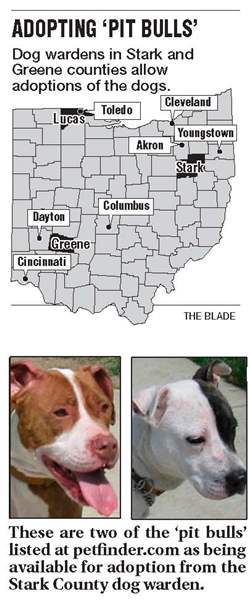 Decision-day-for-adoption-of-pit-bulls-nears-3