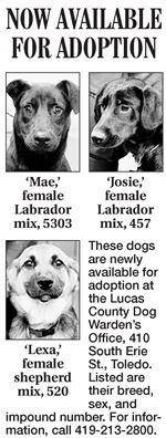 Lucas-County-dogs-for-adoption