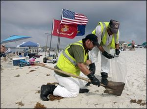 Oil cleanup workers hired by BP pick up tar balls as they work along Pensacola Beach, Fla., Sunday.
