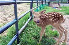 Fawn-s-fate-is-best-left-to-Mother-Nature