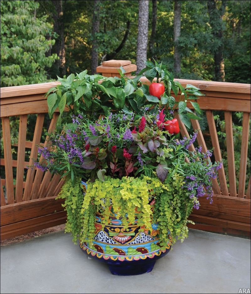 Practical Meets Pretty Container Gardening For Beauty And