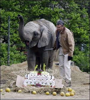 Don Redfox, elephant manager at the Toledo Zoo, shown here with Louie on the elephant's 2nd birthday in May 2005, was struck by Louie's tusk Thursday.