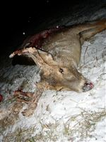 Deer-poacher-s-boast-exacts-penalty
